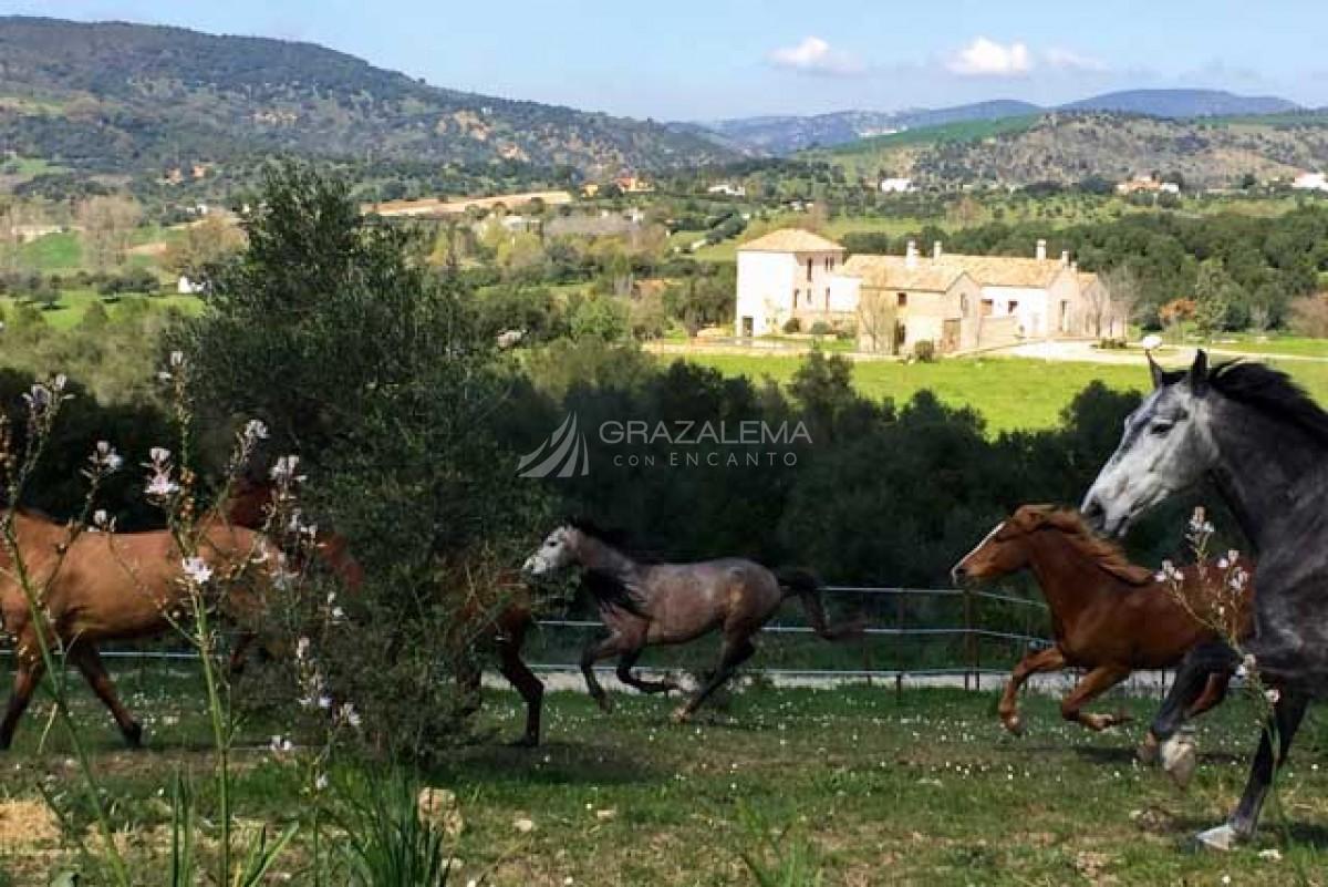 Ruta a caballo en El Bosque Imagen