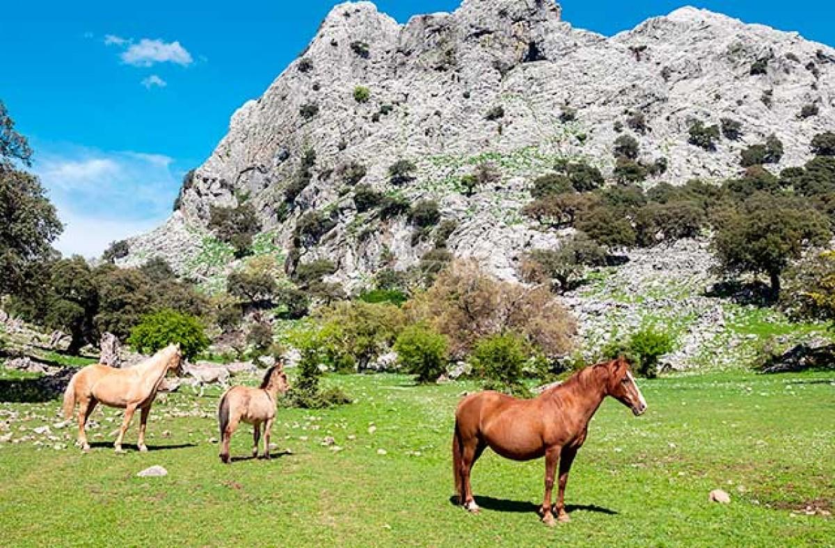 Ruta a caballo en Grazalema Imagen