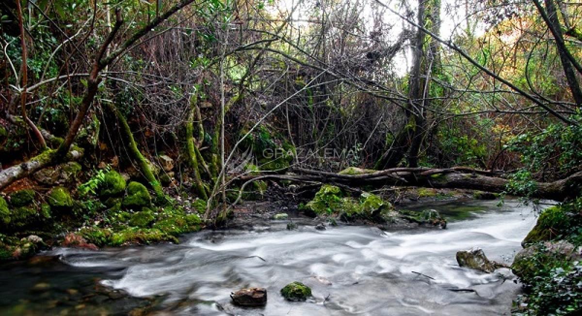 Senderismo en El Bosque Imagen