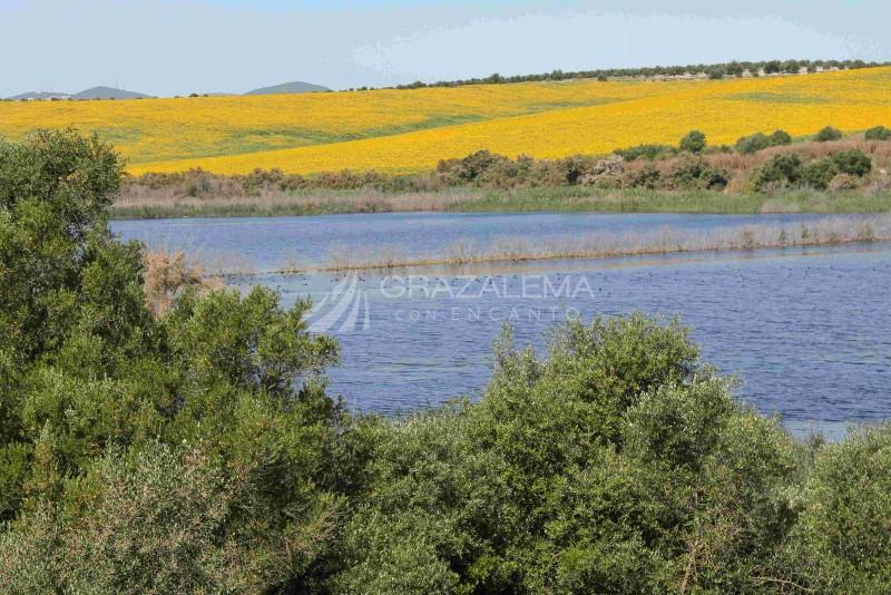 Reserva Natural Complejo Endorreico de Espera (Laguna de Hondilla, Laguna Dulce Zorrilla, Laguna Salada de Zorrilla).  Imagen