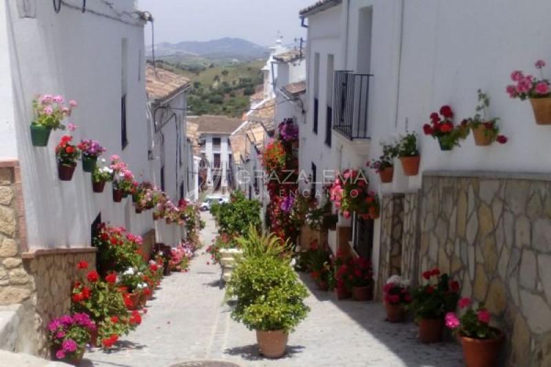 Calles Típicas Imagen