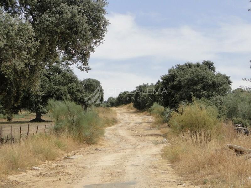 Ruta del Viajero Imagen