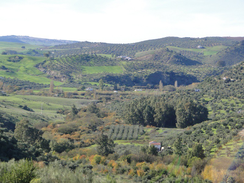 Cañada Real de Jerez a Ronda Imagen