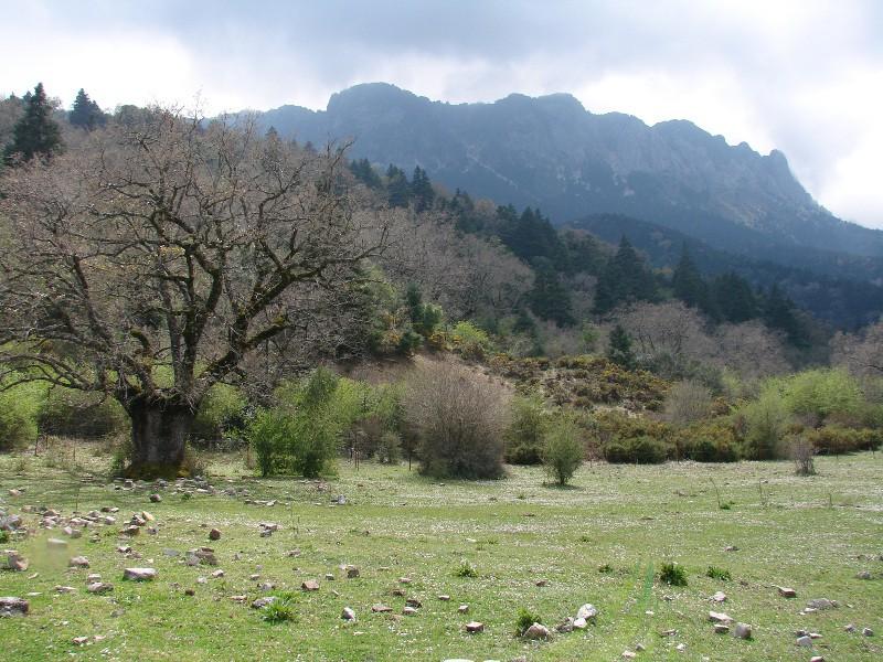 Llanos de Rabel Imagen