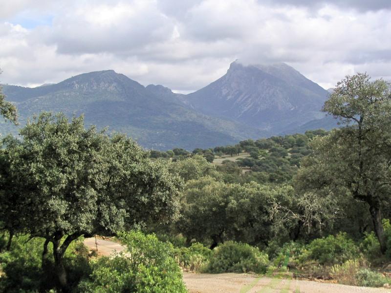 Camino Alto a El Bosque Imagen