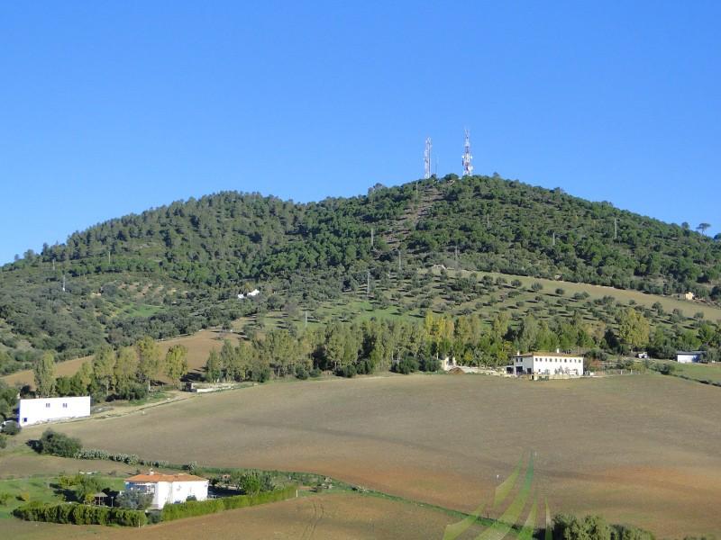 Camino del Pilar Imagen