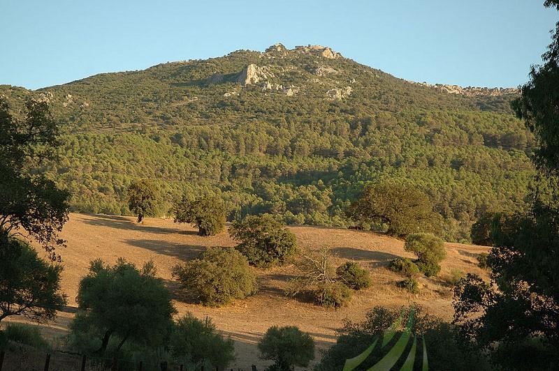 Colada de El Bosque - Camino Del Espino Imagen