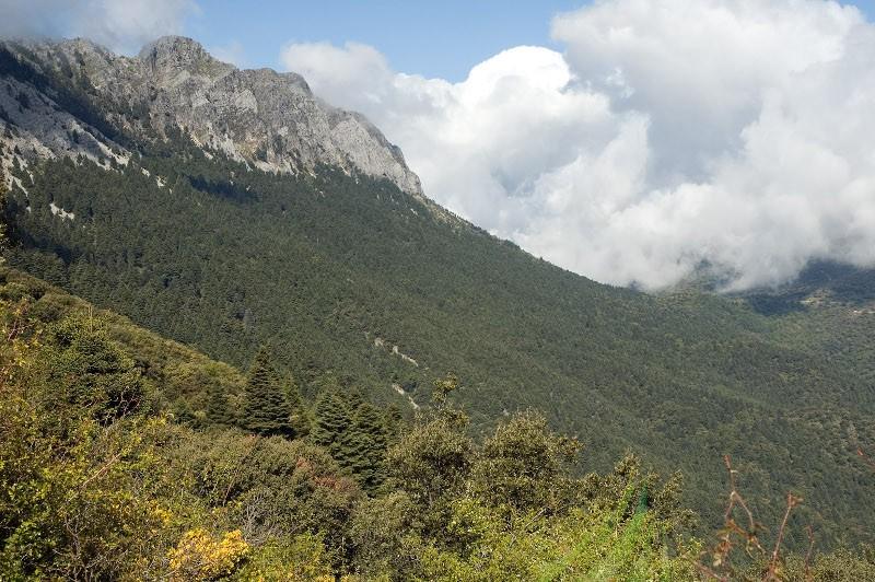 El Pinsapar Imagen