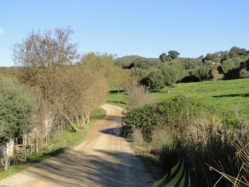 Salinas Cañadas De P. Del Rey  El Bosque Imagen